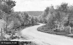 Rugeley, Birches Valley, Cannock Chase c.1965