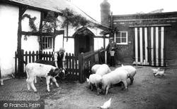 Runcorn, Feeding The Animals 1929