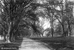 Leasam Avenue 1906, Rye