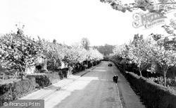 Saffron Walden, Hollyhock Road c.1960