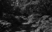 Sanderstead, King's Wood, Hamsey Green c.1960