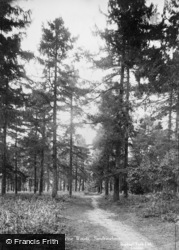 Sandringham, In The Pine Woods c.1930