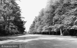 The Avenue c.1955, Sandringham