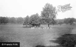 Sandringham, The Deer In The Park c.1926