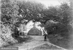 Overhanging Tree c.1910, Sark