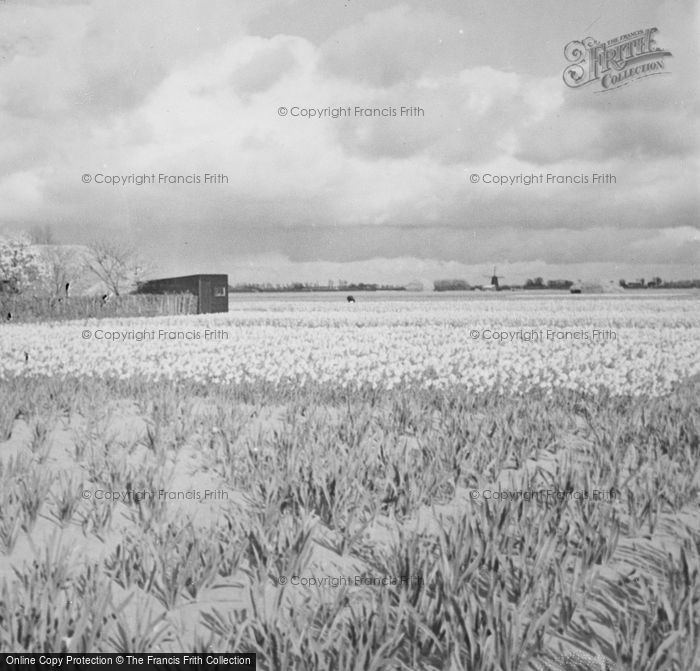 Photo of Sassenheim, Field In The Snow c.1938
