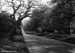 Savernake, Forest, Big Bellied Oak c.1955