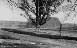 Savernake, Forest c.1955