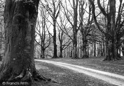 Savernake, Forest, Column Drive c.1955
