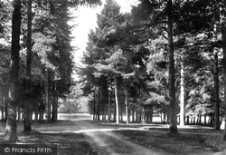 Savernake, Forest, Eight Paths 1908