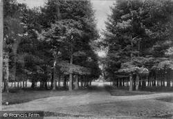 Savernake, Forest, Eight Walks 1901