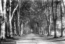 Savernake, Forest, Grand Avenue 1901