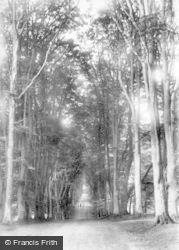 Savernake, Forest, Grand Avenue 1902