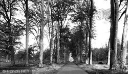 Savernake, Forest, Grand Avenue c.1955