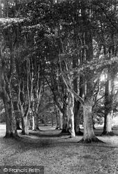 Savernake, Forest, Long Harry Walk 1908