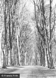 Savernake, The Grand Avenue c.1955