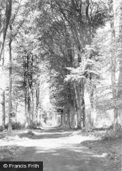 Savernake, The Grand Avenue c.1965