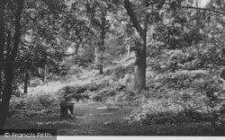 Crohamhurst Woods c.1955, Selsdon