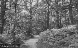 Selsdon, Crohamhurst Woods c.1955