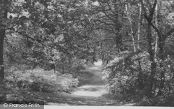 Selsdon, Littleheath Woods c.1955