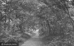 Selsdon, Littleheath Woods c.1955