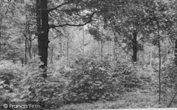 Selsdon, The Bird Sanctuary, Selsdon Wood c.1955