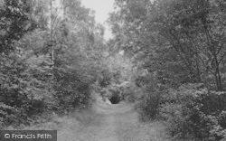 Selsdon, The Bird Sanctuary, Selsdon Wood  c.1955