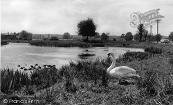 Shalford, The Pond c.1955