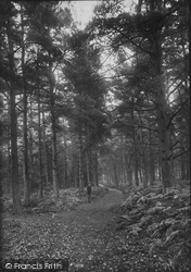 Shamley Green, Thro' The Woods 1906