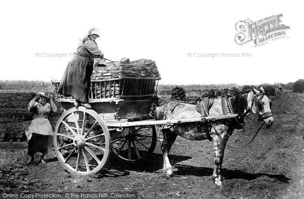 Photo of Shapwick, Turfing 1904