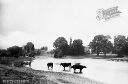 Shepperton, From The Meadows 1890