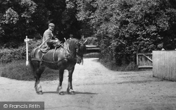 Shere, Cart Horse 1904
