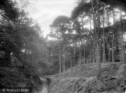 Shere, Firs 1924