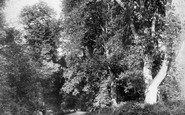 Shere, Gomshall Lane 1904
