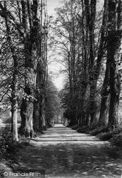 Shere, Lime Tree Avenue 1909