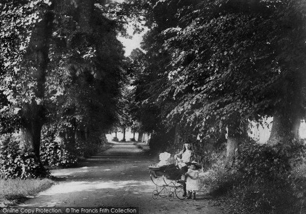 Photo of Shere, The Avenue 1904
