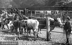 Shrewsbury, Cattle Market 1891