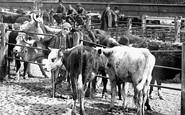 Shrewsbury, Cattle Market 1891