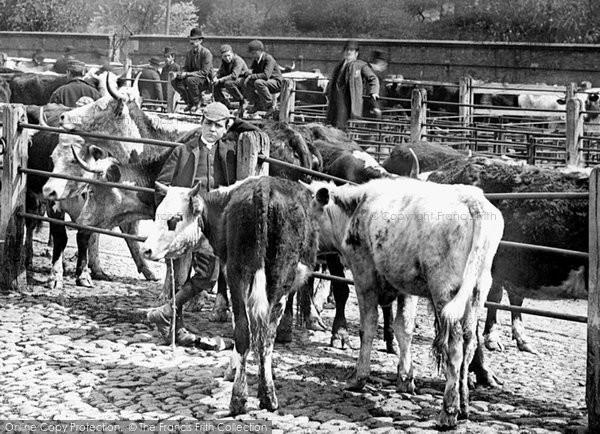 Photo of Shrewsbury, Cattle Market 1891