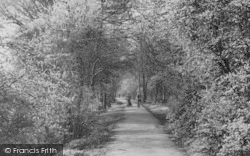 Holly Oak Wood c.1955, Sidcup