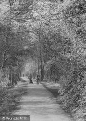 In Holly Oak Wood c.1955, Sidcup