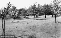 Sittingbourne, Cherry Orchards c.1965
