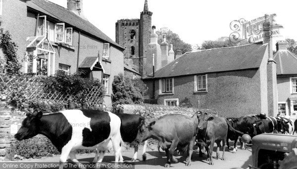 Photo of Slapton, Milking Time c.1960