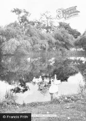 Solihull, Swans In Brueton Park c.1955