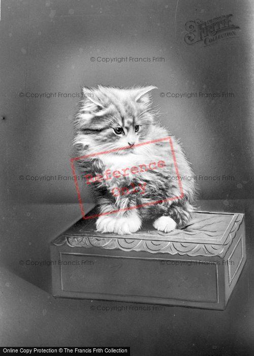 Photo of A Kitten c.1920
