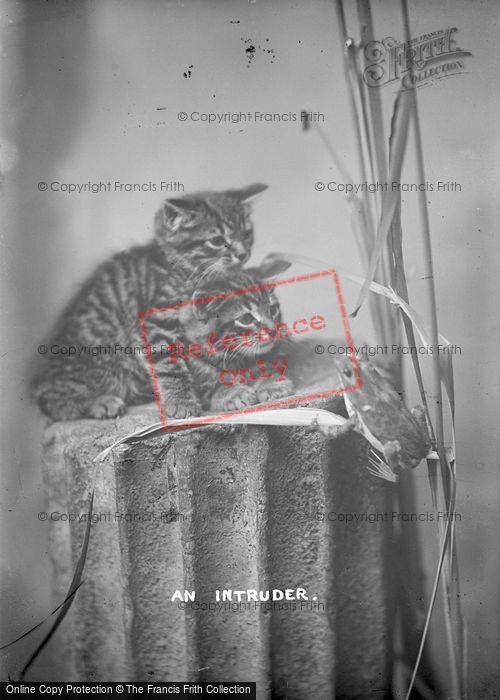 Photo of An Intruder c.1920