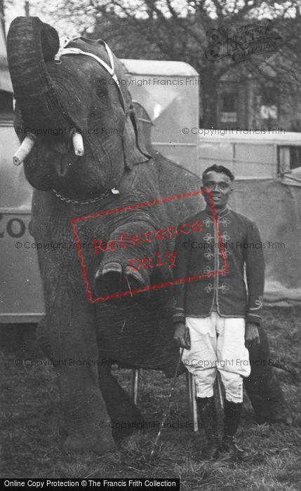 Photo of Circus Elephant c.1930