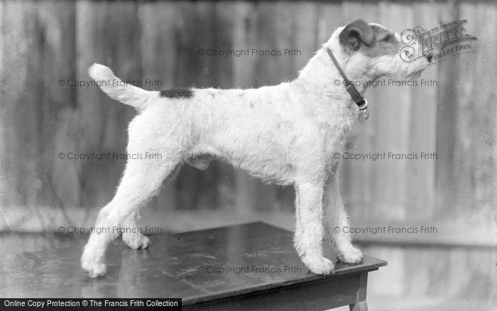 Photo of Dog c.1920