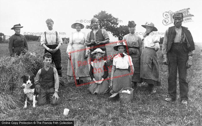 Photo of Harvesting Near Dundee c.1900