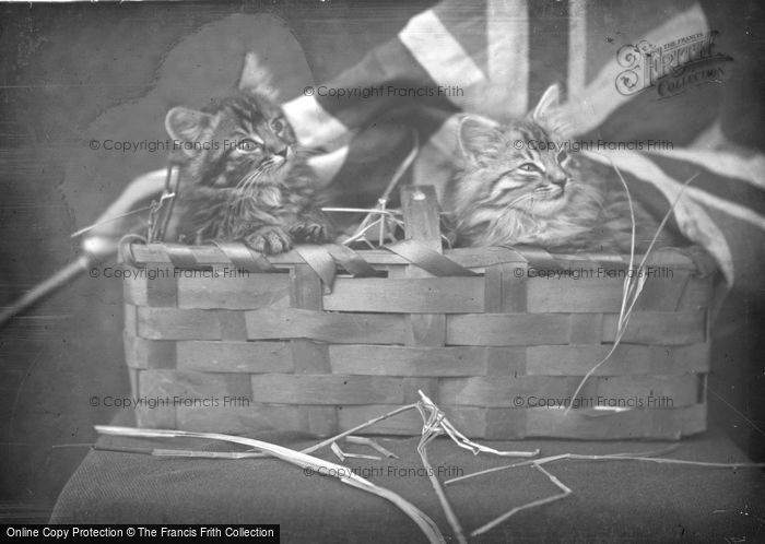 Photo of Kittens In A Basket c.1890